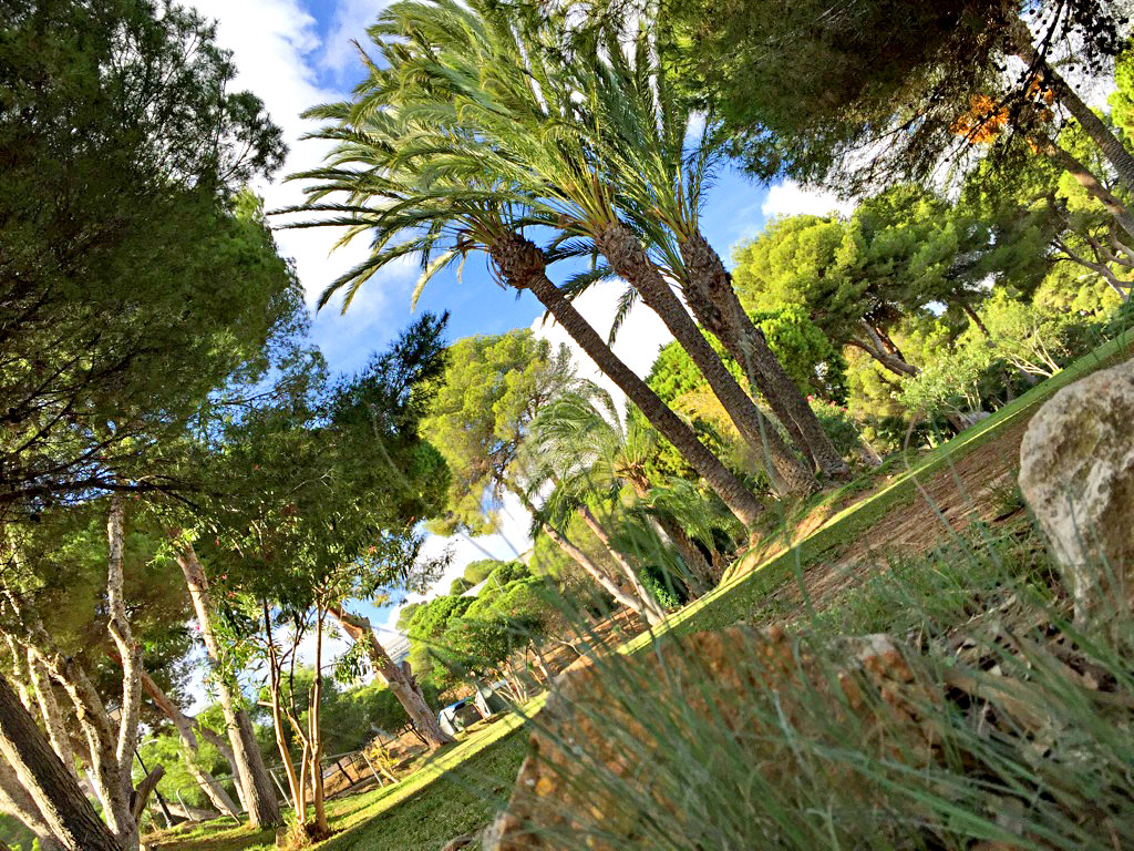 costa-blanca-blog-spanische-vegetation-11
