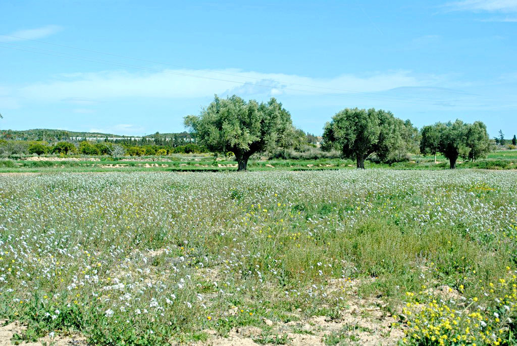 costa-blanca-blog-spanische-vegetation-4